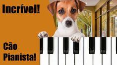 Curioso: Cão Pianista!