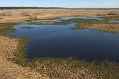 Marshland of Paynes Prairie State Preserve Park.
