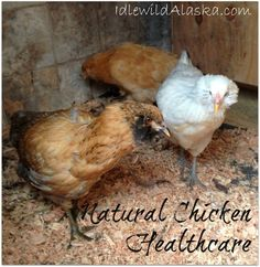 Natural Chicken Healthcare - idlewildAlaska