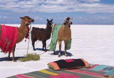 The great salt flats of Jujuy, Argentina. San Salvador, Montevideo, Art Nouveau Arquitectura, Ecuador, Cultural Diversity, Great Shots, Best Memories, Natural Wonders, Lakes