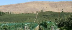 05/15/20015 - Washington State Declares Drought Emergency