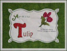 Celebrating Flowers - April Tulips