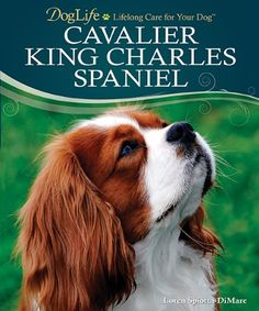 50 Things to Know About Cavalier King Charles Spaniels - 50 Things to Know