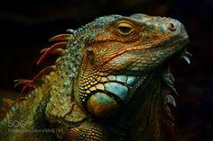 Lizard God of wrath! by JohannDK