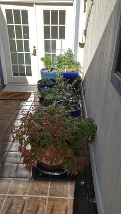 My plants are migrating north for the winter https://i.redd.it/mdgrvg0c6z001.jpg