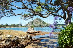 Pataua Estuary, Whangarei District, Northland, New Zealand royalty-free stock photo African Lily, Agapanthus, Image Now, Summer Days, New Zealand, Royalty Free Stock Photos, Holiday, Flowers, Vacations