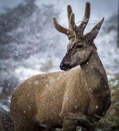 """""""Huemules de Aysén Patagonia"""" premian a ganadores del concurso de fotografía - Portal Agro Chile Patagonia, Portal, Pageants, Photo Contest, Printables, Animales"""