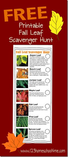 FREE Leaf Scavenger Hunt #nature #homeschool #education #fieldtrip #science