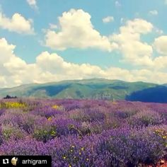 #GoodMorning is really as such, when it starts with something like this, #lavander field near Pirot. Tag a friend to enjoy it together? More info on around Pirot on http://wheretoserbia.com #wheretoserbia #Serbia #Travel #Holidays #Trip #Wanderlust #Traveling #Travelling #Traveler #Travels #Travelphotography #nature #naturelovers #natureza #outdoor #outdoors #Travelpic #Travelblogger #Traveller #Traveltheworld #Travelblog #Travelbug #Travelpics Video by @arhigram