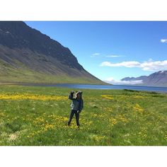 Predators aren't native to Iceland...except for the @spirithoods #GreyWolf | SnapWidget