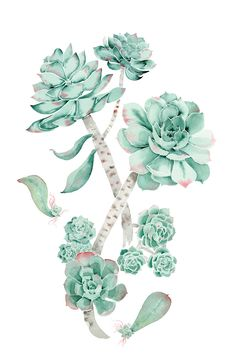 8.5x11 Wandering & Growing Succulent Print by aimeevandrimmelen, $20.00 @Tendenza Fashion & Interiors saw this and thought of you:)