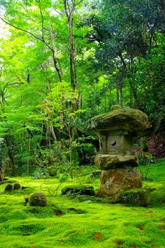 Moss Garden - Sanzen-in temple in Ohara, Kyoto, Japan #verde #green