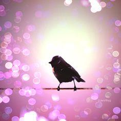 Bird in bokeh  by ~worthyG