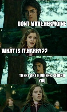 dont movehermoine what is itharry there are gingers behi - Horny Harry