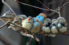 thank you for my song birds, little blue. :D