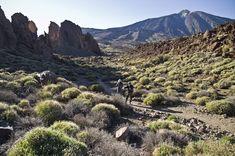 Senderismo, Tenerife, Islas Canarias // The best hiking trails in Tenerife: Tenerife Walking Festival Canary Islands // Wandern auf Teneriffa, Kanarische Inseln Tenerife, Walking, Canary Islands, Hiking Trails, Mount Rainier, Mountains, World, Nature, Travel