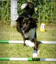 Check out this great website for the dog lover in all of us - http://dogtraining-b1v2jhck.mydependablereviews.com