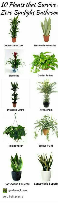 Houseplants that Live Without Sunlight or Low Light. Bathroom plants, indoor plants and hanging plants