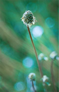 composition with flowers, plansts,bugs,animals,birds Bokeh Photography, Color Photography, Creative Photography, Douglas Adams, Beautiful Images, Beautiful Flowers, Happy Paintings, Amazing Nature, Shades Of Green