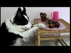 The Best of Dogs Saying Grace Before Meals - My dogs do this!!