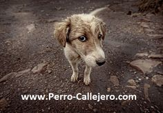 View our Street Dog community on www.perro-callejero.com