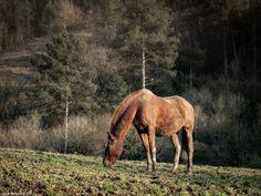 Ruta entre caballos