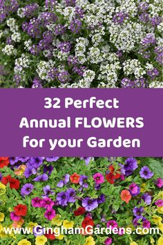 The Best Annual Flowers, includes the Best Annual Flowers for Shade and the Best Annual Flowers for Sun, information on how to determine the right time to plant annual flowers, tips for buying annual flowers, flower care, annual flowering vines and unique annual flowers. #flowergardeningforbeginners #annualflowerpictures #whentoplantannuals #ginghamgardens Annual Flowers For Shade, Shade Flowers, Bulb Flowers, Best Perennials, Flowers Perennials, Planting Flowers, Flower Gardening, Gardening Zones, Container Gardening