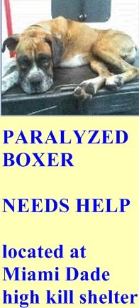 DIED after rescue --- Paralyzed Boxer, 1690585, needs help prior to 6:30 PM today this pet qualify for SUN program under category D-2 https://www.facebook.com/urgentdogsofmiami/photos/a.212733878761023.62878.191859757515102/959242070776863/?type=1&theater +++sleep well sweetheart, you will be never forgotten++++
