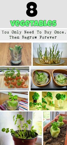 8 Vegetables That You Buy Once And Regrow Forever ! Complete guide How To Grow The Edible Garden, Indoor Garden, Vegetable Garden, Garden Plants, Indoor Plants, Outdoor Gardens, Flowers Garden, Spring Flowers, Growing Veggies