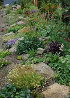 Northwest native plants in this garden include Western Columbine (Aquilegia formosa), Western Wild Ginger (Asarum caudatum), Partridge Foot (Luetkea pectinata), and Rose Meadowsweet (Spiraea splendens var. splendens).