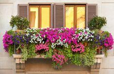 Fioriere da balcone: abbinamenti per la mezz'ombra | Fiori e Foglie