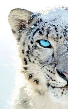 Imagen de tiger, animal, and snow