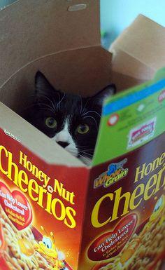 cat in a box - 2   more antics.   meg   Flickr
