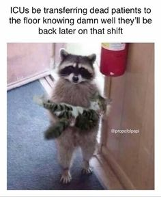 Funny Animal Quotes, Animal Jokes, Cute Funny Animals, Funny Animal Pictures, Cute Baby Animals, Funny Cute, Cute Cats, Animal Funnies, Funniest Animals