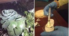 Cómo aplicar insecticida a nuestras suculentas Cactus, Ideas Para, Diy, Gardens, Vegetables Garden, Weird Things, Vegetable Gardening, Succulents, Appliques