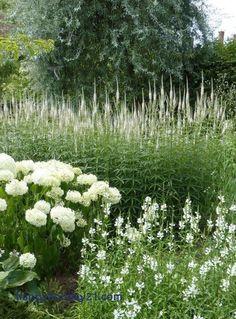 Moon garden Veronicastrum, Hydrangea and Chelone Moon Garden, Dream Garden, Beautiful Gardens, Beautiful Flowers, Beautiful Gorgeous, Obedient Plant, Exterior, White Gardens, Garden Cottage