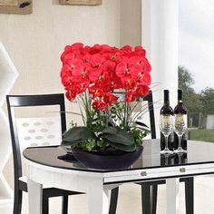 Phalaenopsis seeds interior decoration flowers potted 100 seeds