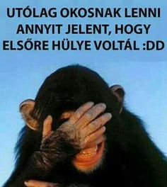 Sarcastic Humor, Haiku, Puns, Einstein, Jokes, Wisdom, Lol, Humor, Alternative