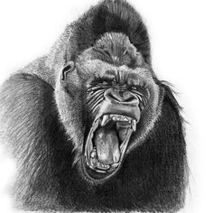 Couldnt figure out quite where to go with this guy...but heres an angry gorilla.