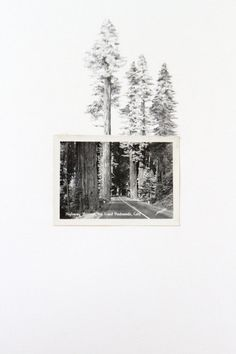 Through The Giant Redwoods.Completas  una postal. Me gusta.