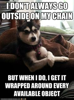 thats like my dog he will wrap himself around a pole then  when I try to get him untied he gets tangled even more