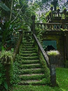 Gorgeous!! So cool! Little ivy overgrown staircase that's all hidden.