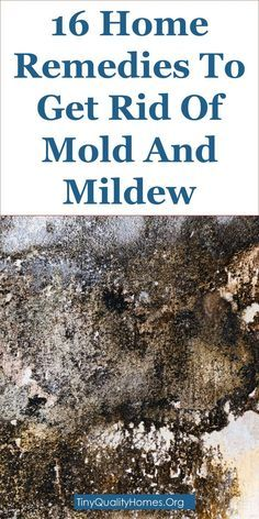 16 Home Remes To Get Rid Of Mold Mould And Mildew