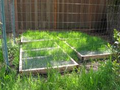 Wire Mesh Grazing Frame Protects Grass For Chickens