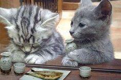 居酒屋で酒を飲む猫