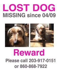 reunited Charlie is a small dachshund missing from Painter Ridge in Washington, CT. Please call Linda at 203 917 0151 or 860 868 7922. Thank you!