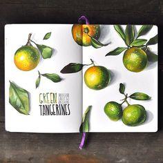 WEBSTA @ anna.rastorgueva - Green tangerines Килограмм мандаринов и пара часов свободного времени#sketch #sketchbook #copic #copicmarkers #markers #leuchtturm1917 #topcreator #tangerine
