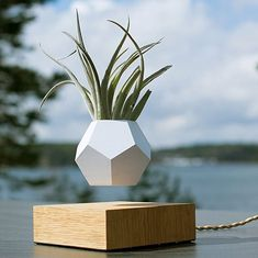 Authentic Floating Levitating Plant Pot for Air Plants