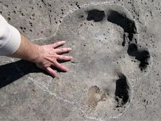 """Sauropod track at the """"plateau of the dinosaurs"""" in Turkmenistan close to the border with Uzbekistan."""