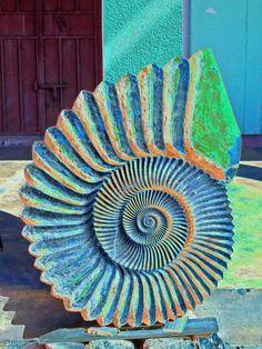 Schnecke,Versteinerung,Marokko, Ammonit,Fake,bunt